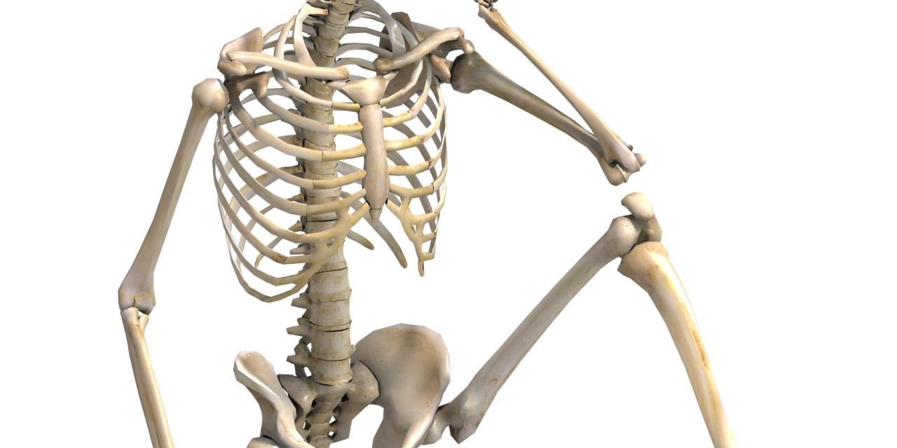 MaleSkeletonsitting1-1280×640